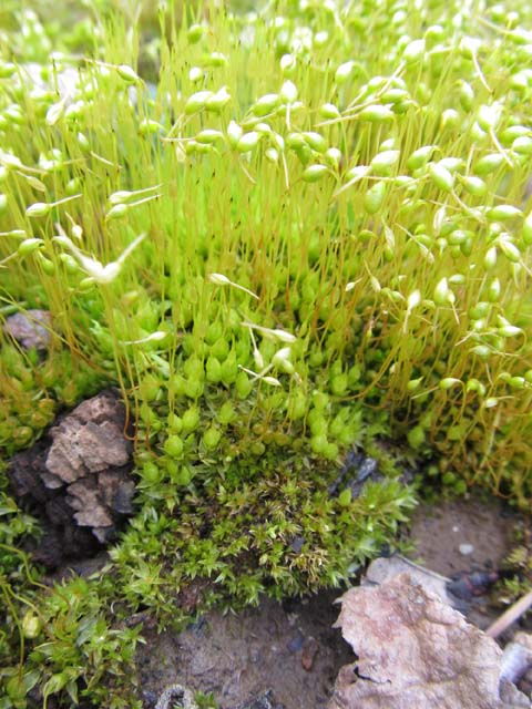 an introduction to the nature of a moss Introduction for nature essay free example essay on nature blog example essays nature plays a major role and has a profound impact on the lives of all organisms.