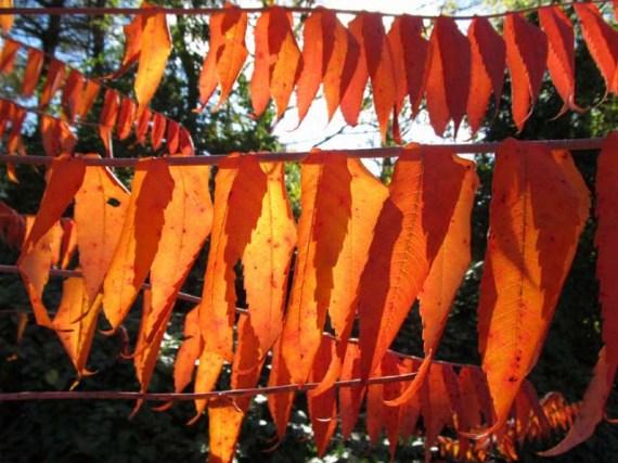 IMG_3086 crop alt red