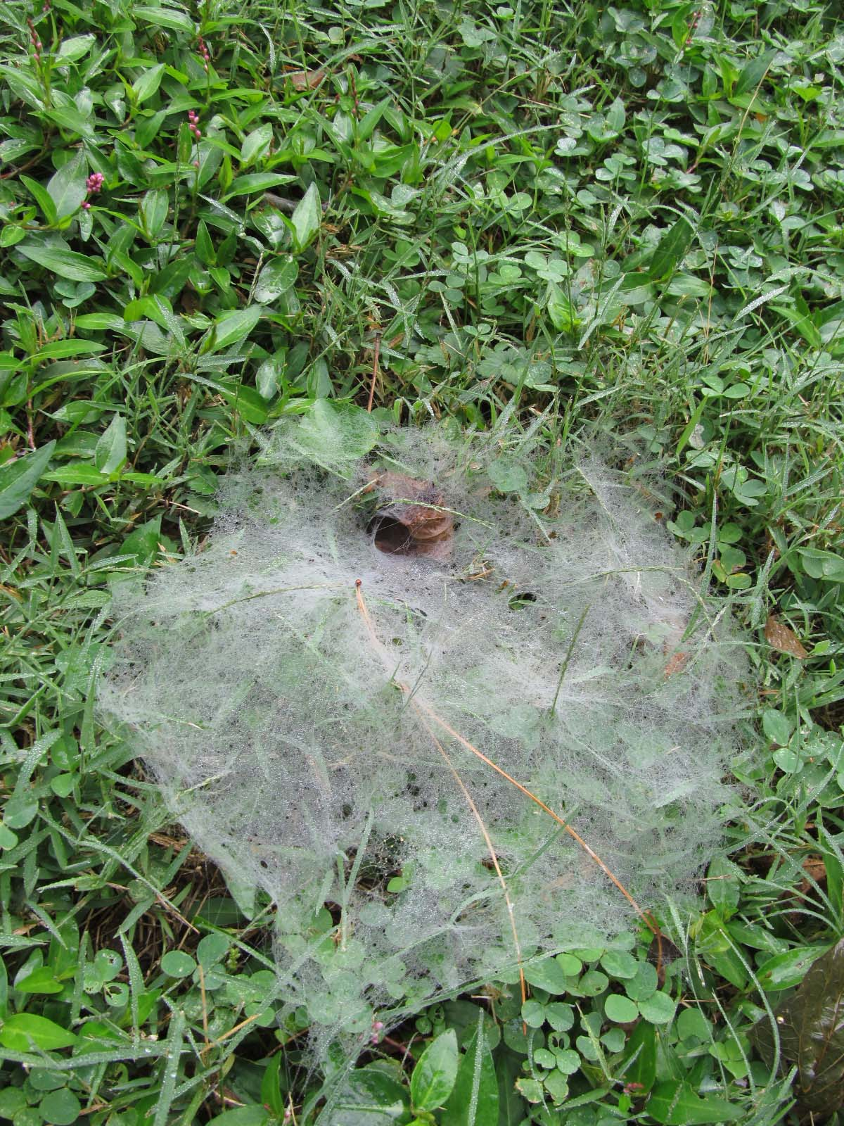 orb web | naturesnippets Funnel Spider Web